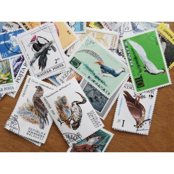 画像4: 鳥切手20枚入りパケット