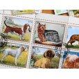 画像4: 犬切手20枚入りパケット  (4)